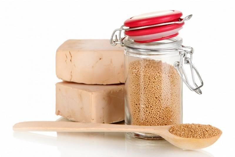 Дрожжи - важный ингредиент в пищевой индустрии